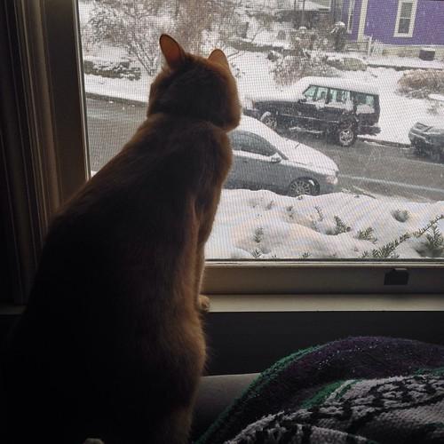 Watching the snow. #cats #catsofinstagram #ColumbiaTusculum