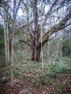 Plantation Ruins and a Cursed Tree – Random Connections