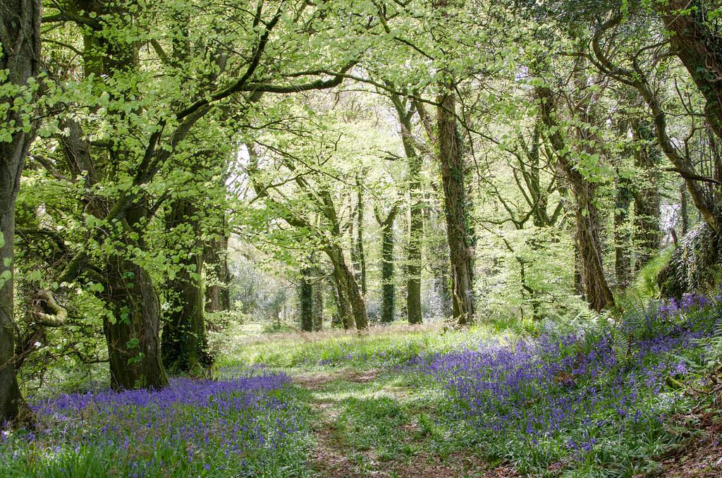Manch Woods