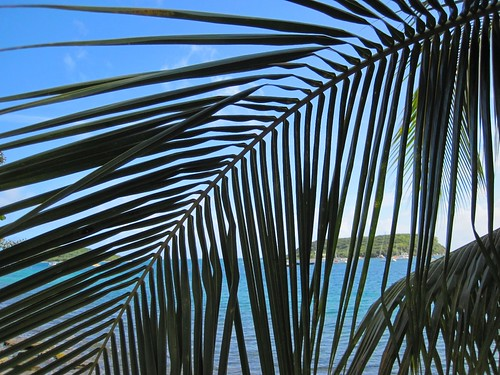 Through the palms