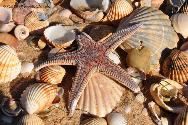 Starfish in Barreta+Island Faro Portugal