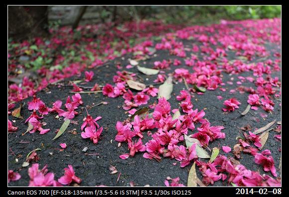 20140208_Flower