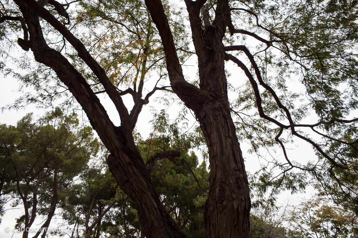 Parque Pignatelli