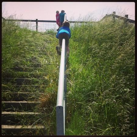 Fietsvakantie biesbosch
