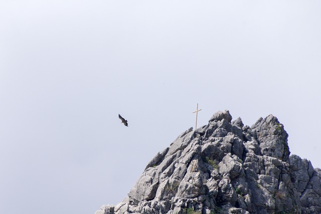 Bird of prey & cross