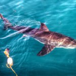 White Shark Diving Company in Gansbaai, South Africa