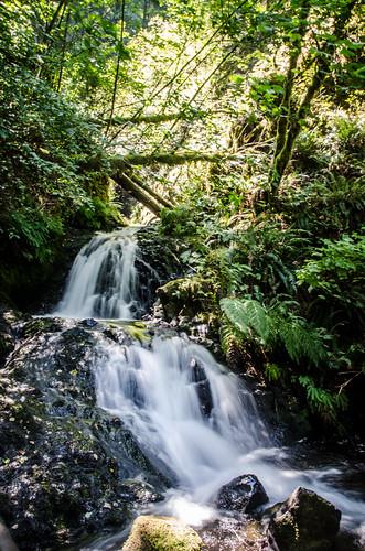 Shepherd's Dell Falls