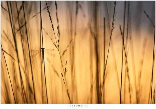 Verborgen in het gras, badend in het mooie avondlicht