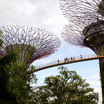 010 Viajefilos en Singapur, Gardens by the bay 03