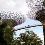 010 Viajefilos en Singapur, Gardens by the bay 03