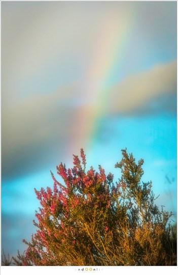 De heide en de regenboog
