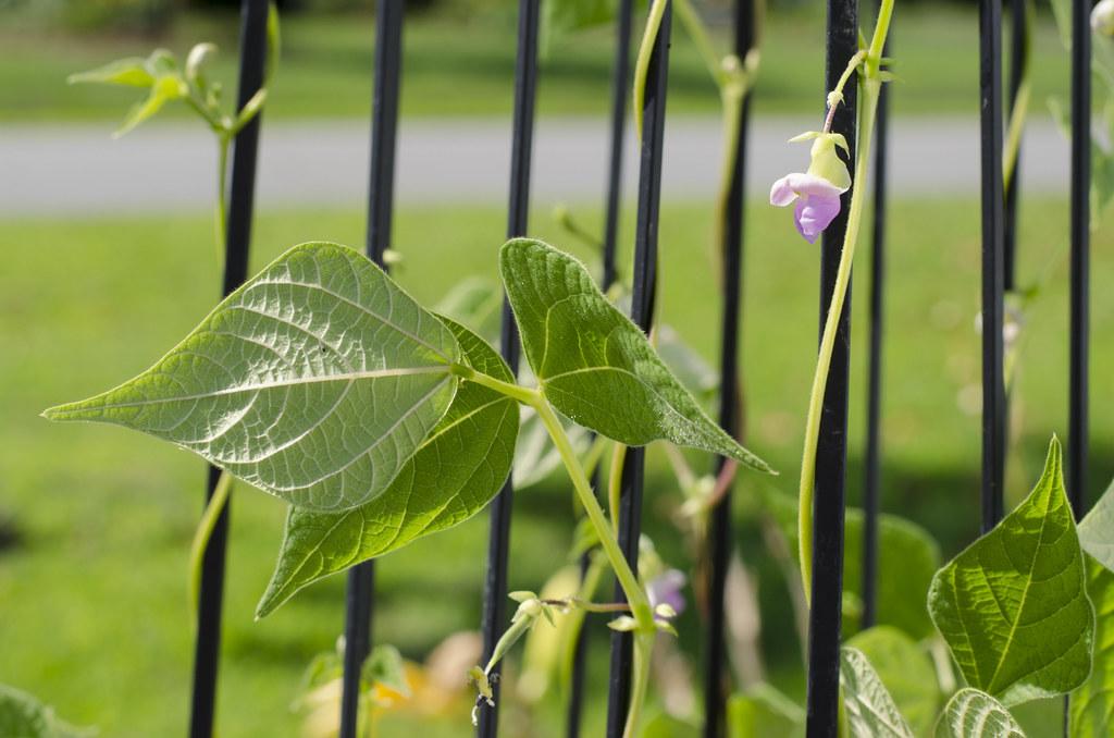 garden // weeks eight, nine, and ten 2