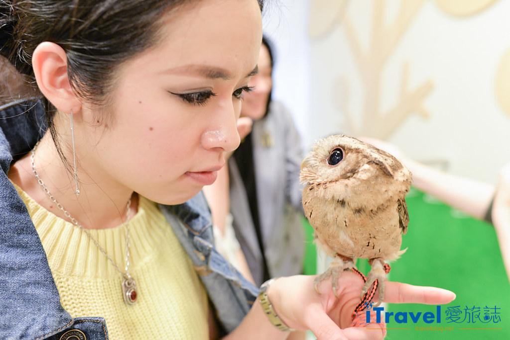 《福冈景点推荐》OWL Family 猫头鹰咖啡店:教你在线预订与萌萌小家伙的约会