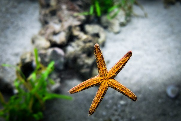 Flying Starfish