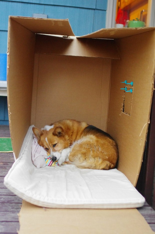 Help fight corgi homelessness