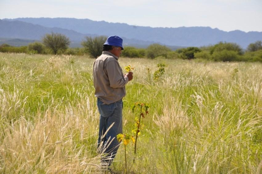 El productor Pedro Andrada cuenta con dos hectáreas del cultivo bioenergético de Jatropha en La Puntilla, Belén.