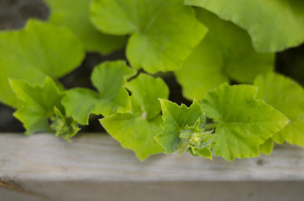 garden 2014 // weeks seven & eight 3
