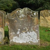 heraldic device and ferns