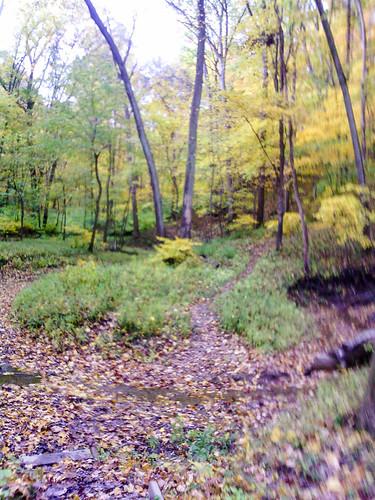 Forest Glen 50K