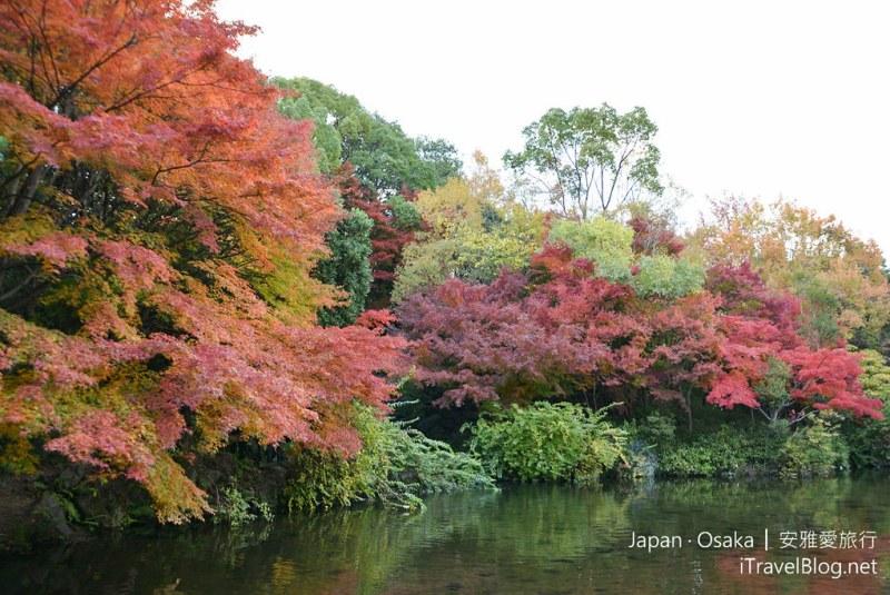 大阪赏枫 万博纪念公园 红叶庭园 15