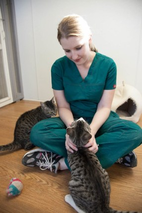 Feline Leukemia (FeLV) is a highly contagious and deadly disease among cats. Keep reading to learn about the symptoms, diagnosis, and prevention of FeLV.