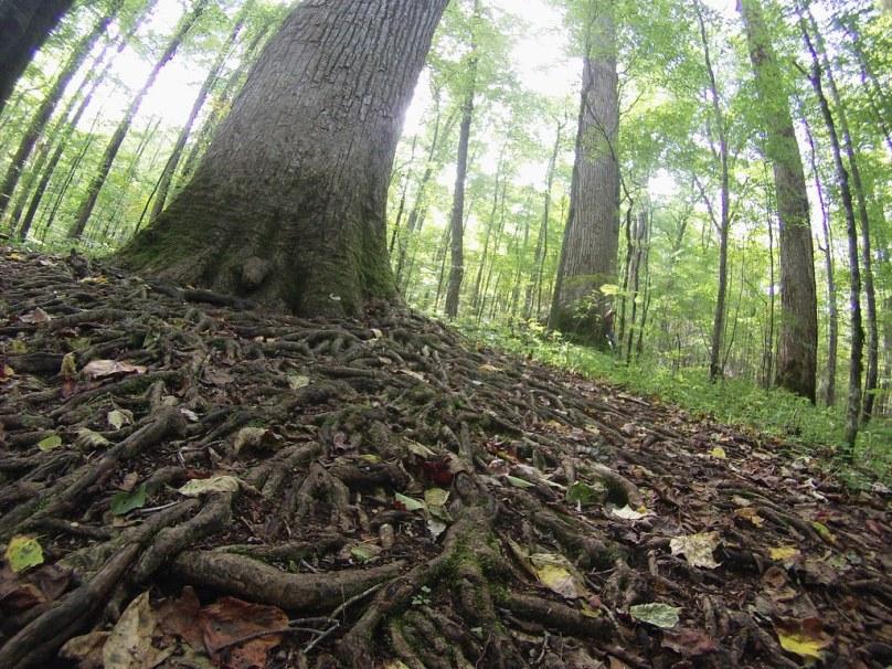 Joyce Kilmer Memorial Forest, North Carolina, Oct. 9, 2014