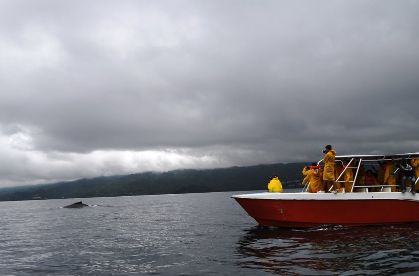 A Whale Watching Boat in Samaná Bay, Dominican Republic.