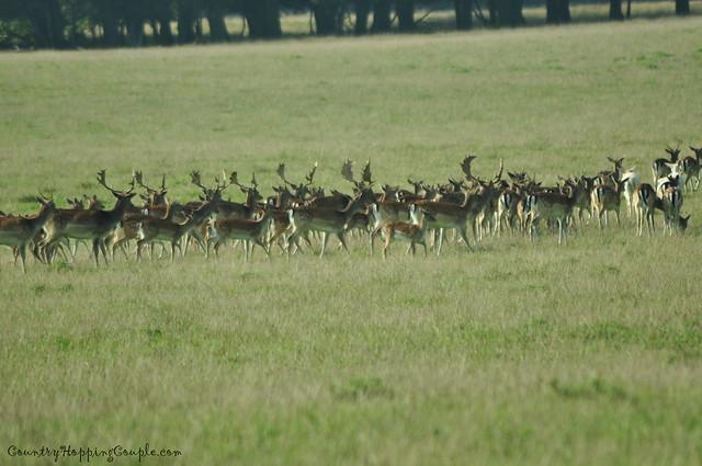 Deers Dyrehaven