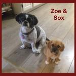 Zoe and Sox