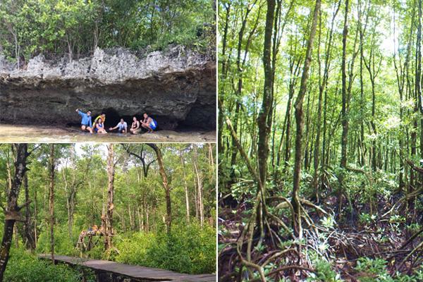 Mangrove Maratua