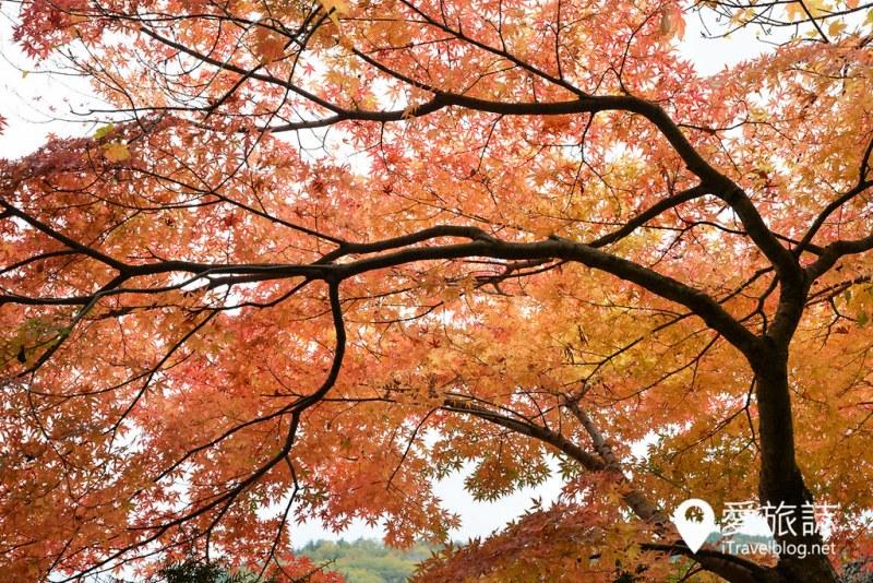 《日本岐阜景点》白川乡合掌村:秋末探索童话乡村院落