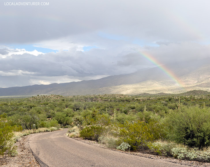 Cactus Forest Drive (11 Beautiful Things to Do in Saguaro National Park).