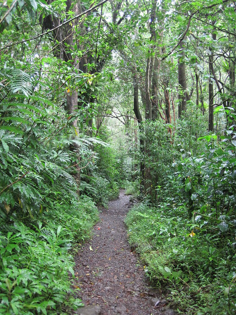 Picture from the Manoa Falls Trail