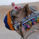 Viajefilos en el desierto de Abu Dhabi 11