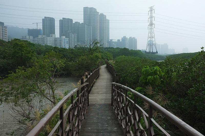 紅樹林自然步道DSCF6138