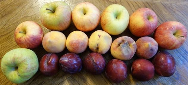 Homestead Creamery Week 11 Fruit Delivery