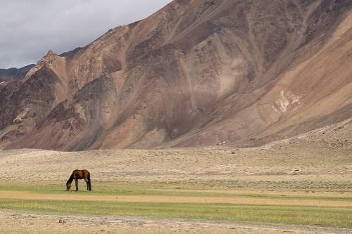 Horse. Pshart Valley