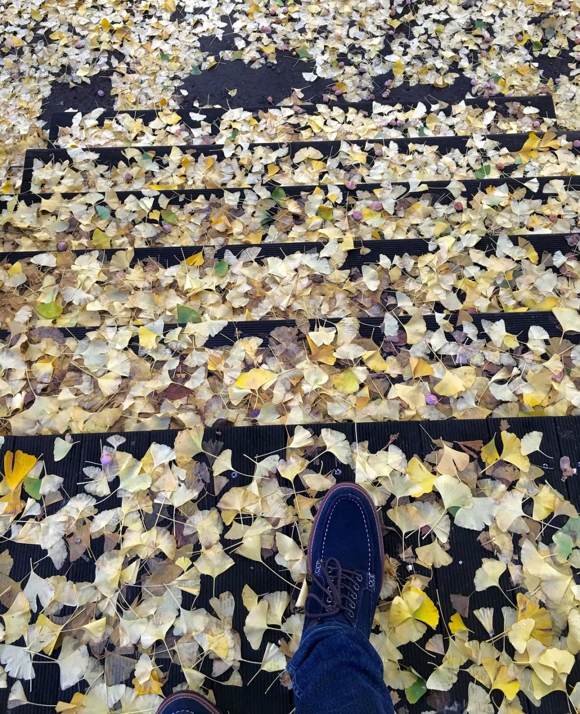 University of Tokyo Ginkgo leaves