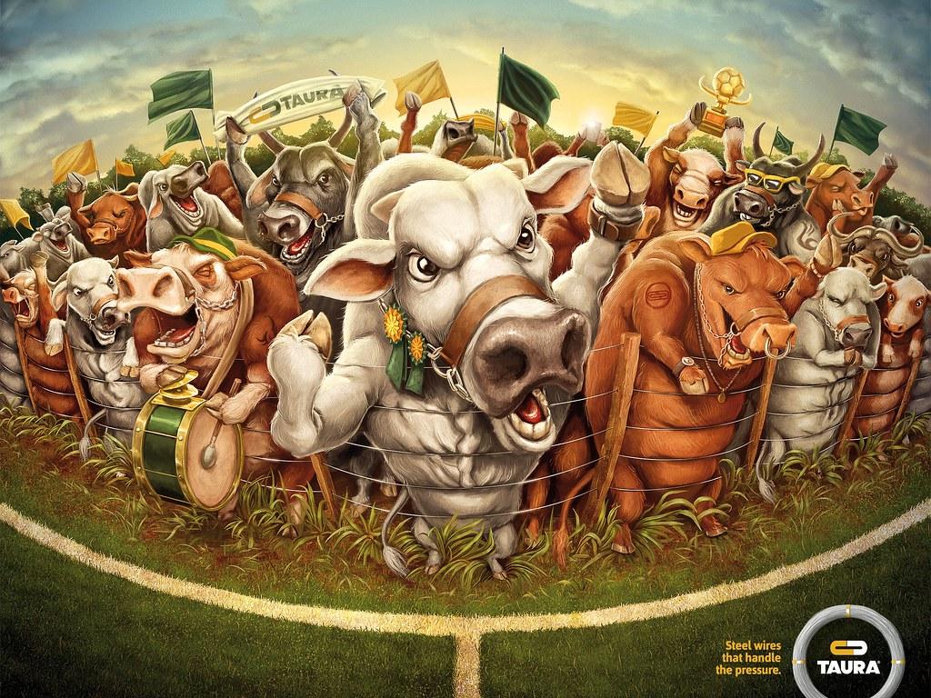 Taura - Bulls