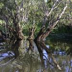 02 Viajefilos en Australia, Kakadu NP 077