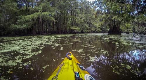 Sparkleberry Swamp with LCU-167