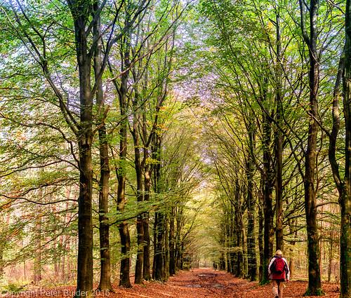Utrechtse Heuvelrug Autumnal hues-2