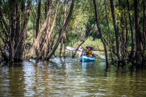 Savannah River Paddling-049