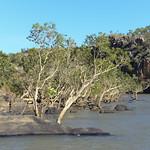 03 Viajefilos en Australia, Katherine NP 004