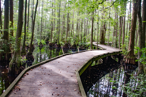 Boardwalk at Woods Bay State Park