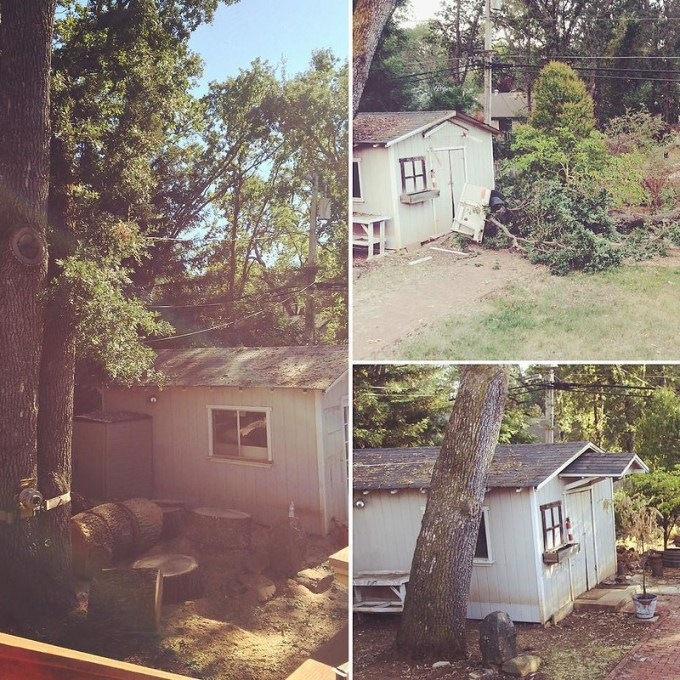 When we moved in our house three years ago we had this tree that leaned over the shed. Not too long ago a branch fell from it causing damage to our shed. Today the tree was removed, and now the yard seems a little brighter.
