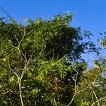 02 Viajefilos en Australia, Kakadu NP 073