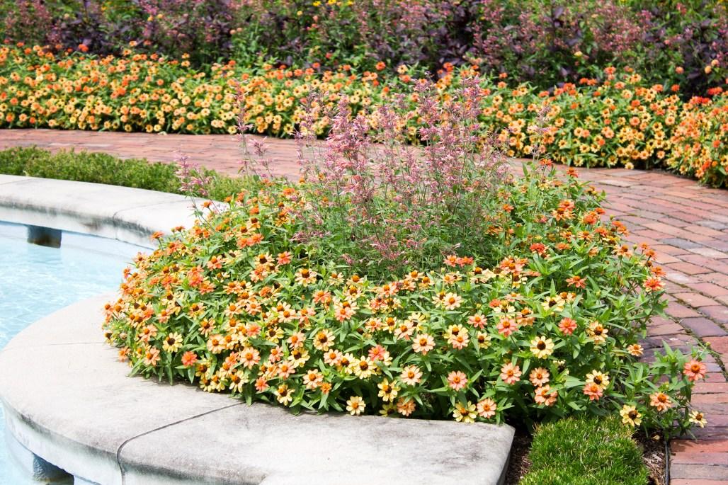 mt-cuba-gardens-pool-flowers