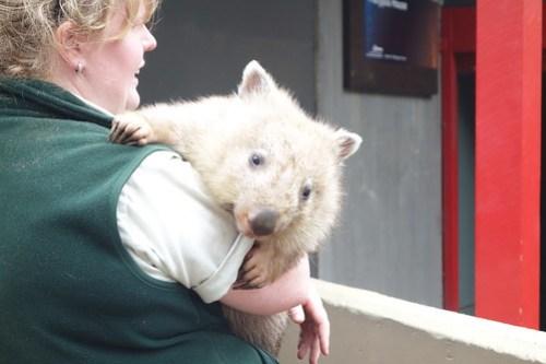 01 Sydney & Jervis Bay-24 Taronga Zoo