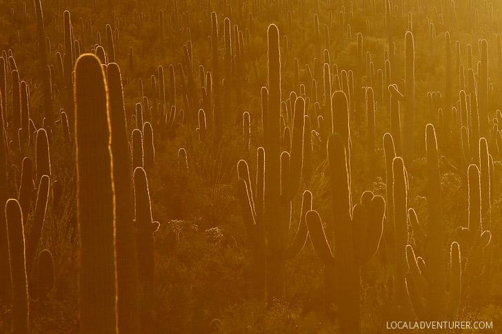 Hugh Norris Trail (11 Beautiful Things to Do in Saguaro National Park Tucson AZ).